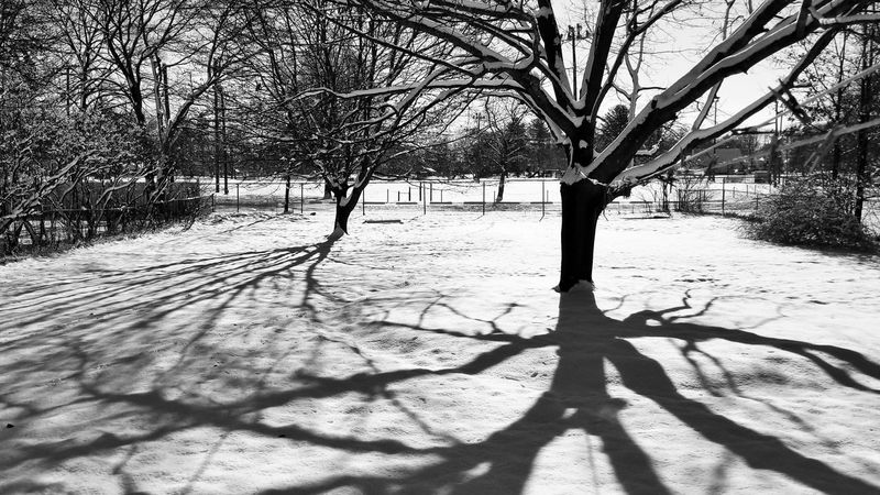 Sunday shadows. Backyard Photography Black & White Black And White Photography EyeEm Best Shots - Black + White Shadow Sunlight Tree Outdoors Day Nature No People Branch Beauty In Nature Sky Bare Tree Snow Winter Cold Temperature Tranquility Tree Trunk