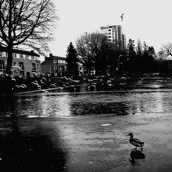 Hi! Check This Out Hanging Out Enjoying Life Wintertime Coldweather Walk This Way Late Post  ILoveMyCity Beautiful Reflection Latepost Blackandwhite Wintertime ⛄