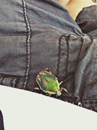 why do bugs love me