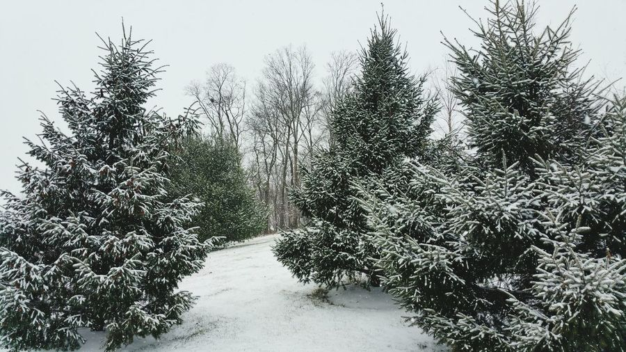 Snow in the trees near work