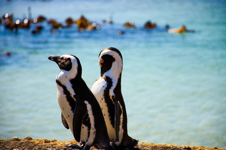 Close-up of penguins against sea