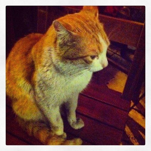 Bu da dun aksam masanin misafirlerindendi 14şubat Kadikoy Kahvebahane Istanbul cat kedi eglence pub bar