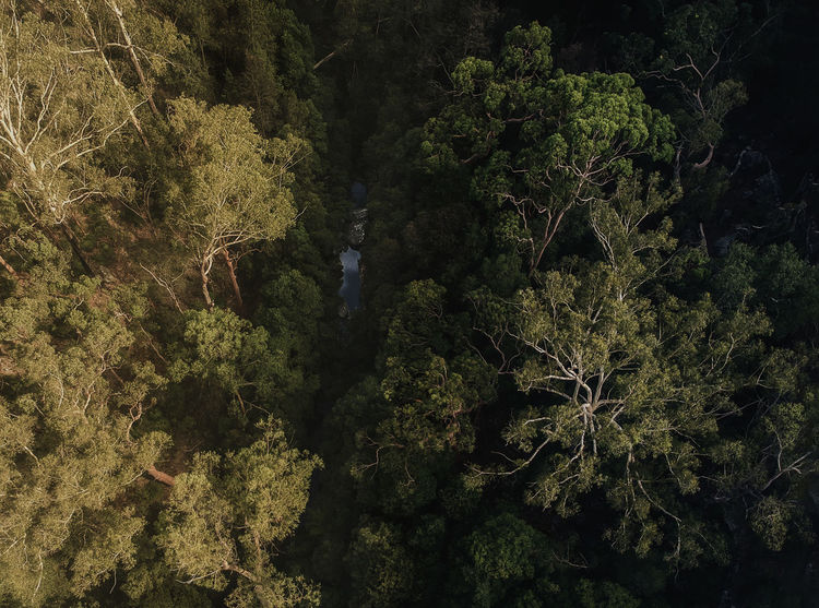 the creek below Dji Spark Abstract Color Block Nature Bushland Green Travel Landscape Tranquility New South Wales  Baulkham Hills Woods Aerial Aerial Photography Drone  Trees Forest Creek Australia Full Frame Close-up Beauty In Nature Water Freshness