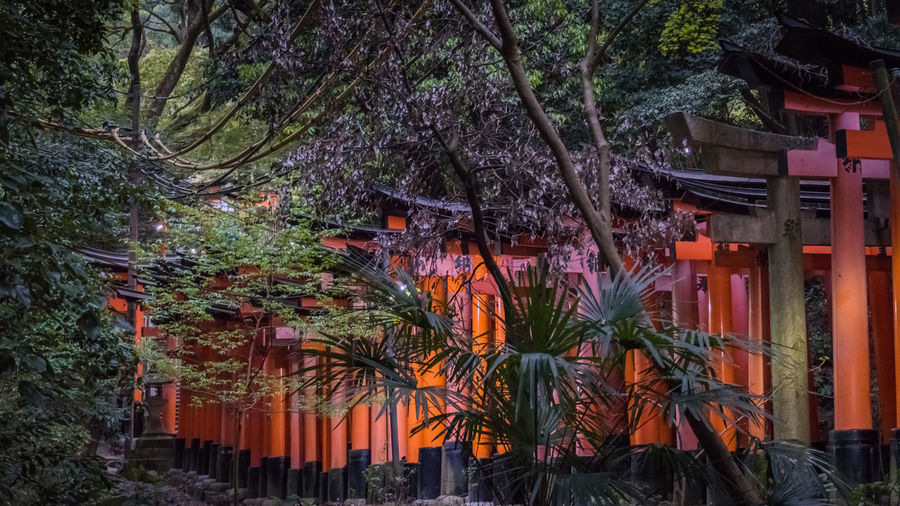 Trees by illuminated building in forest
