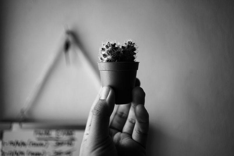 Kektus Human