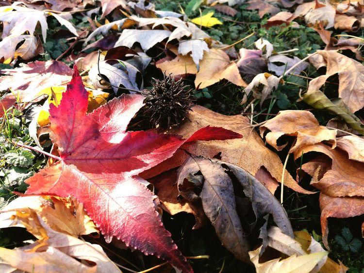 Leaf Nature Autumn Natura Giardino Huawei P9 Plus Autunno  Foglie