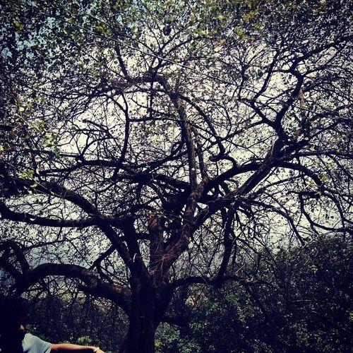 Day clickArtisct tree @lonavala