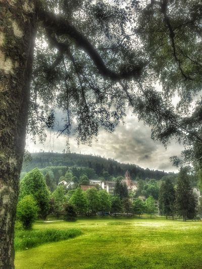 Idyll Park Bad Herrenalb Tadda Community EyeEm Nature Lover Eyem Nature Germany Baden-Württemberg  EyeEm Deutschland