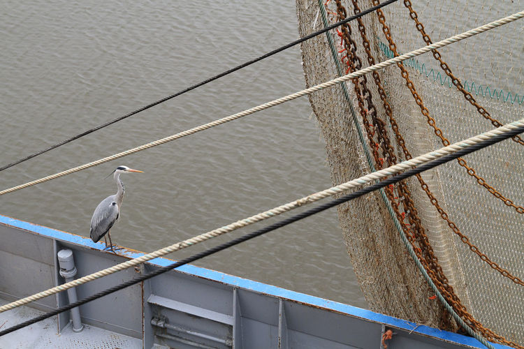 High angle view of great blue heron perching on fishing boat in sea