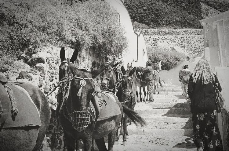 Oia , Thira , Santorini , Greece Port Travel Blackandwhite Donkies Donkey Steps Climb 35mm Film