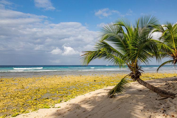 Photo taken in Saint Mathias, Barbados