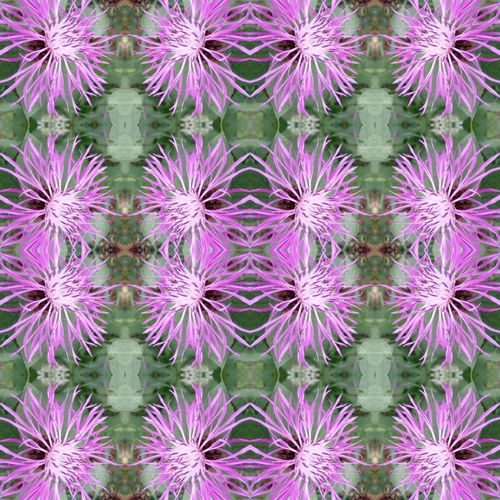 Purple flower background Backgrounds Beauty In Nature Purple Flower Head Fragility Pattern Outdoors Freshness Eye For Photography Eyeem Market Eye Em Nature Lover Symmetry Artofvisuals Pattern Of Nature EyeEm Selects EyeEm Gallery From My Point Of View Summer! ♥ Garden Flowers Flowers,Plants & Garden The Week On EyeEm Plant Patterns In Nature Uncultivated Beauty In Nature