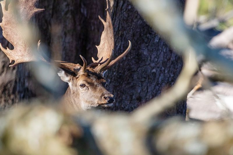 A very frightened deer📸🦌 Canoneos Deer Canon Photo Denmark Copenhagen Canonphotography Photography EyeEm Selects Animal Themes Animal Wildlife Animal One Animal Deer Mammal Animals In The Wild No People Day Nature Selective Focus Looking At Camera Animal Head  Portrait Plant Tree Close-up Outdoors