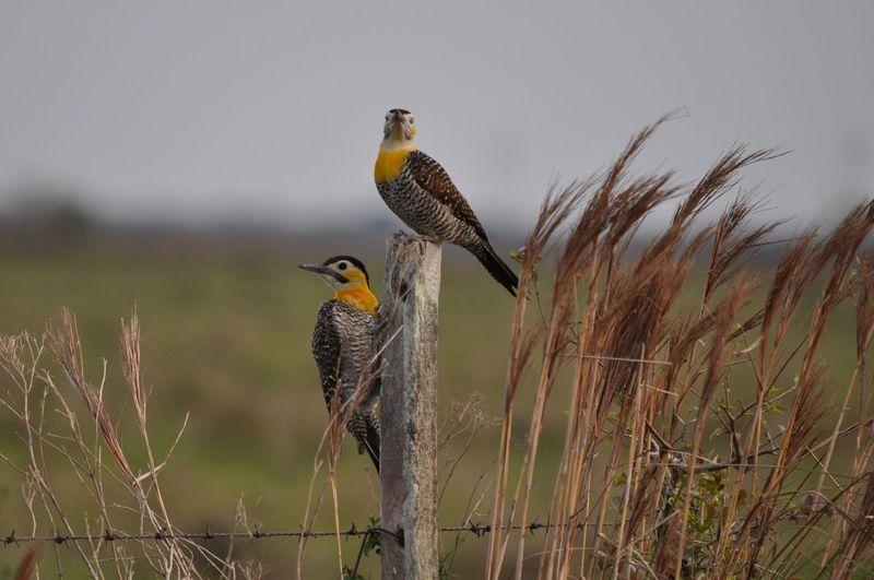 Carpintero Birdwatching Birds🐦⛅ No People Day Wild