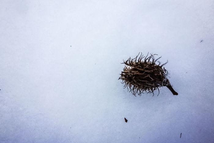 Baumsamen Cold Ground Nature Samen Seed Seme Tree Seed Winter Winter Trees