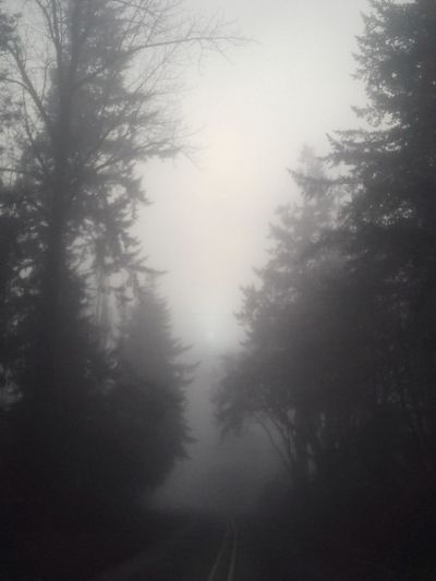 The Way Forward No People Towards The Unknown Tree Fog Forest Nature No People Pine Tree Winter Scenics Morning WoodLand Tranquil Scene Beauty In Nature Tranquility