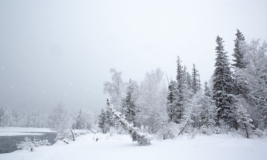 Snow Winter Cold Temperature Tree Plant Beauty In Nature Tranquility Tranquil Scene Land Scenics - Nature No People Nature Non-urban Scene White Color Covering Day Sky Environment Field Snowing Extreme Weather Kanas XinJiang