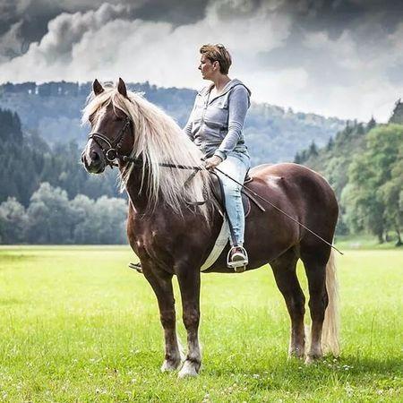 Schwarzwälder SchwarzwalderFuchs Horse Amazone