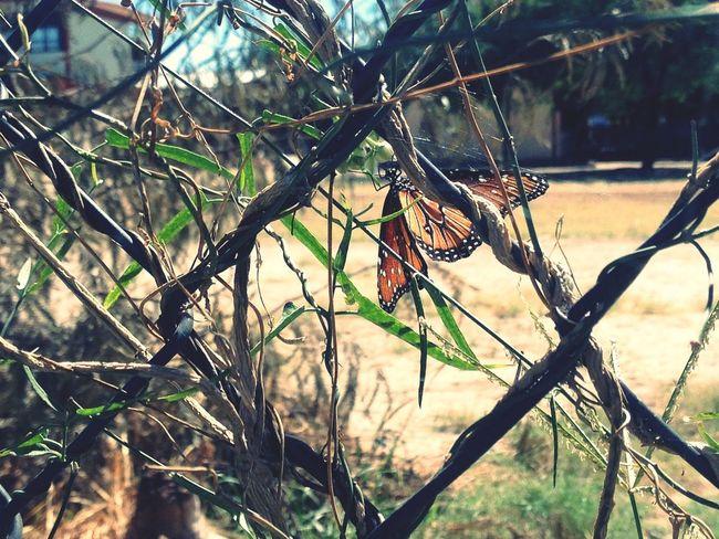 Mariposas Monarcas First Eyeem Photo Popular Photos Popular