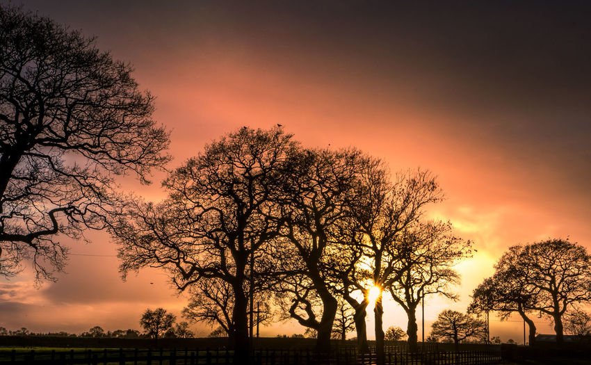 Silhouette bare tree against romantic sky at sunset