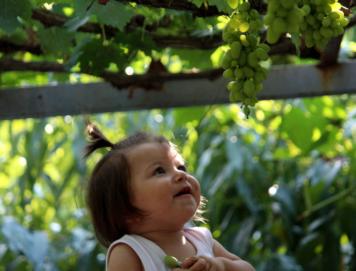 Cute girl looking at green fruits in garden