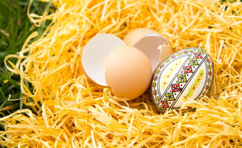 Easter eggs on nest