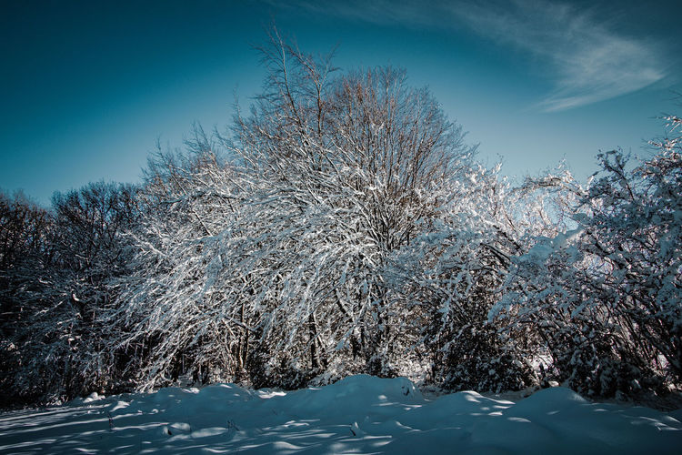 Aerial view of snow covered trees against blue sky