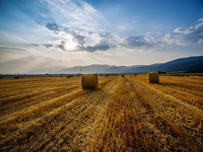 Agriculture Crop  Field Farm Sky Cereal Plant Gold Colored Summer Backgrounds Beauty In Nature