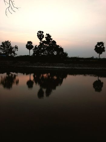 Sunset Reflection Silhouette Lake Tree Water Dawn Sky Morning Tropical Climate Tranquility Travel Nature Scenics Outdoors Landscape Palm Tree Beauty In Nature No People An Eye For Travel