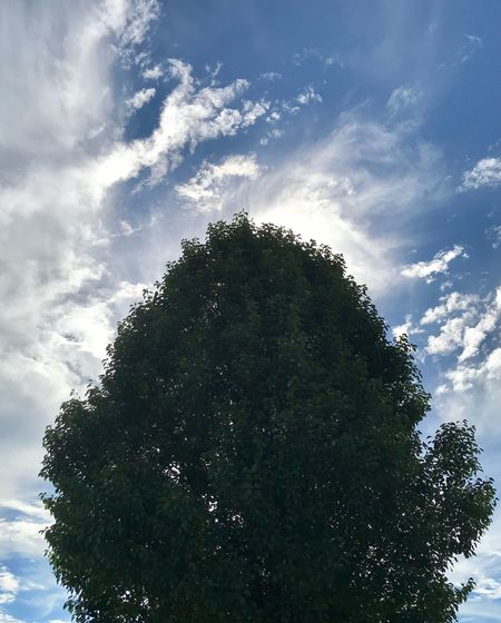 Clouds & Tree