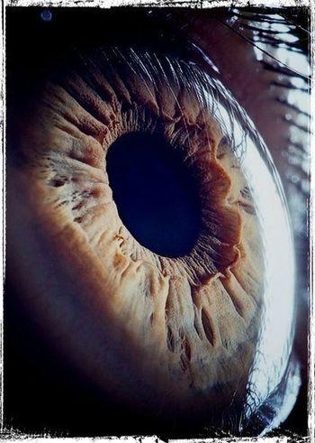 Eye Eyes Sumptuous Beauty