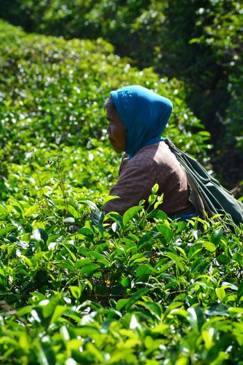Side view of woman working at tea plantation