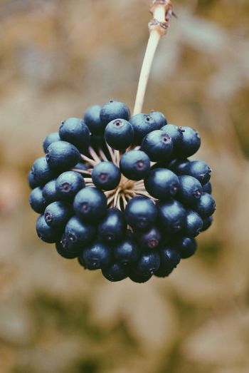 Close-up of grapes