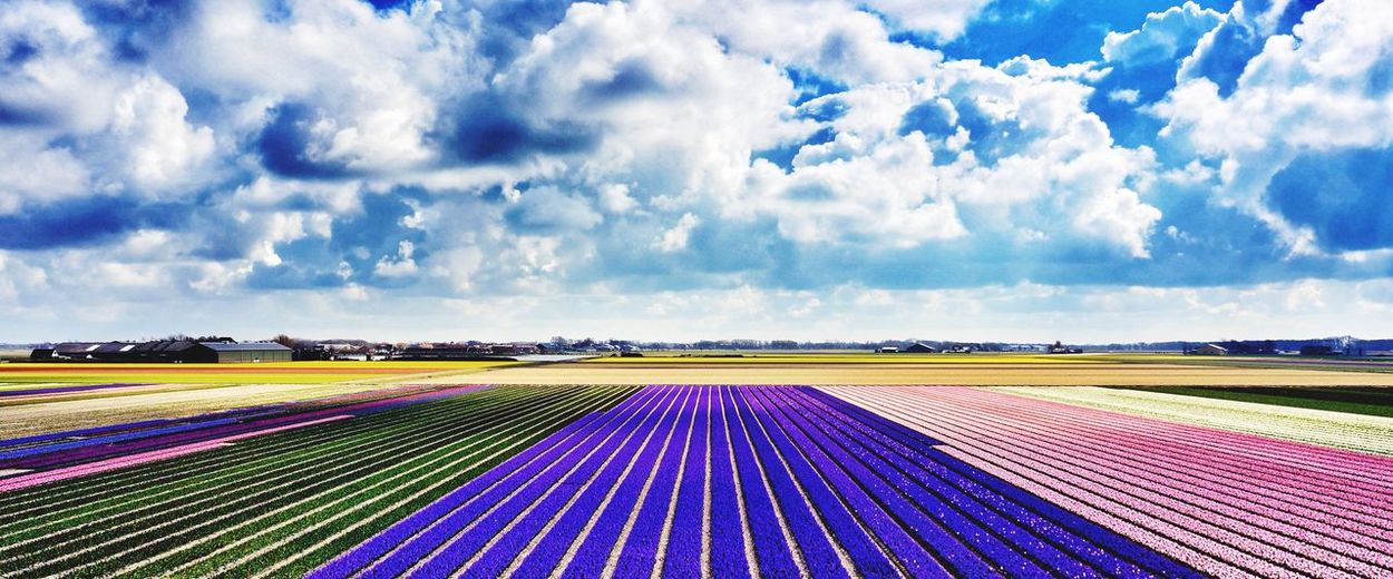 View Of Colorful Flowers On Landscape