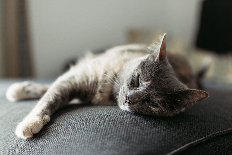 Chilling time Animal Themes Cat Cats Cats Of EyeEm Chill Chilling Close-up Day Domestic Animals Domestic Cat Feline Focus On Foreground Indoors  Lying Down Mammal No People One Animal Pets Relax Relaxation Sleeping Sofa Whisker Pet Portraits