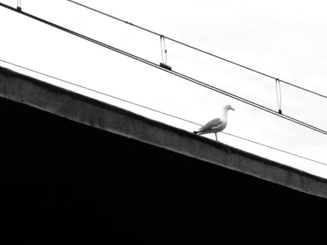 Gabbiano Stazione FS Railwaystation Seagull Seagulls In The City Seagull Serenity