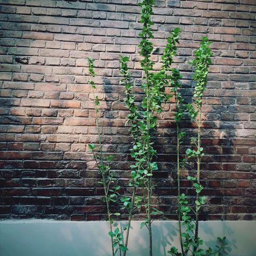 夏日光年。 Plant Growing Wall - Building Feature First Eyeem Photo