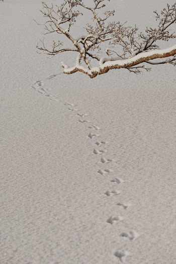 animal tracks in the snow Branch Snow Covered Snow Covered Landscape Snow Covered Branch Background Christmas Winter Wintertime Winter Wonderland Snow Animals In The Wild Animal Representation Tracks FootPrint Footprints Animal Track Cold Frost Copy Space Open Space Sand Beach Day Backgrounds Shades Of Winter