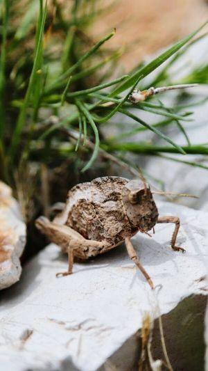 Böcek Tabiat Doğa Beetle