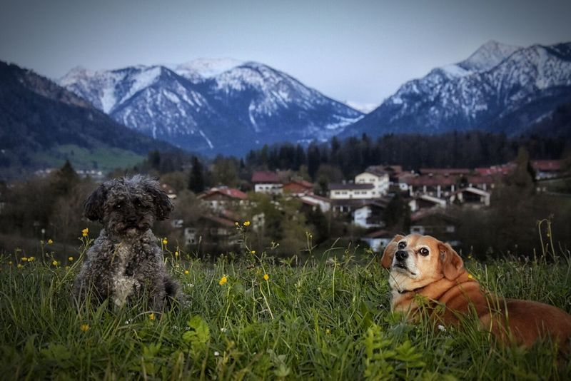 Mountain Nature Animal Mountain Range Landscape Animals In The Wild Domestic Animals Pets Beauty In Nature No People Grass Day 2 Dogs 🎈👻