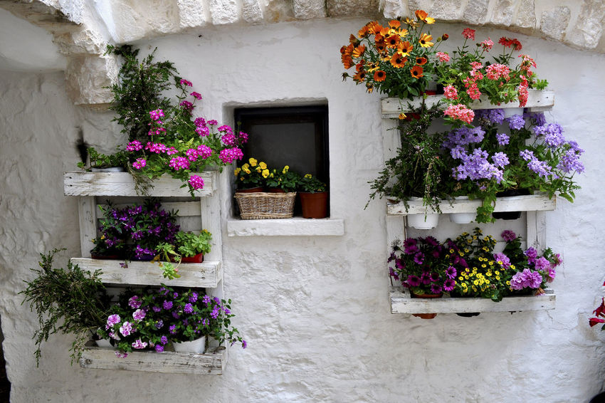 Architecture Blooming Building Exterior Cisternino Flower Flower Head Freshness Outdoors Petunia Pink Color Plant Potted Plant Purple Window Window Box