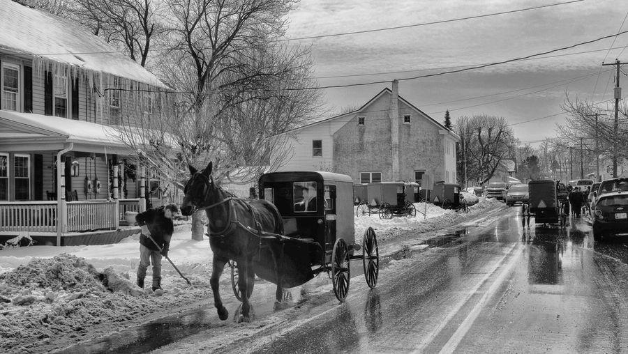 Capturing Movement Amish Buggy