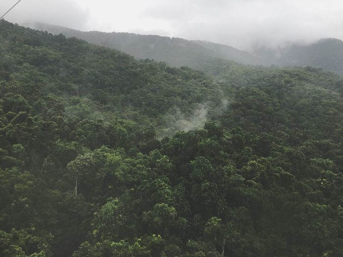 Tree Nature Mountain Beauty In Nature Scenics Lush Foliage Landscape Fog Growth Tranquility Non-urban Scene Tranquil Scene Outdoors Day Green Color Sky Idyllic No People Forest Perspectives On Nature