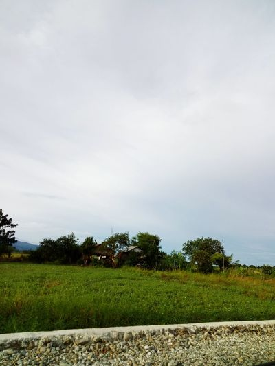 Perspectives On Nature Cloud - Sky Tree Agriculture Tranquility Outdoors Field No People Day Nature Beauty In Nature Sky Rural Scene Grass Freshness