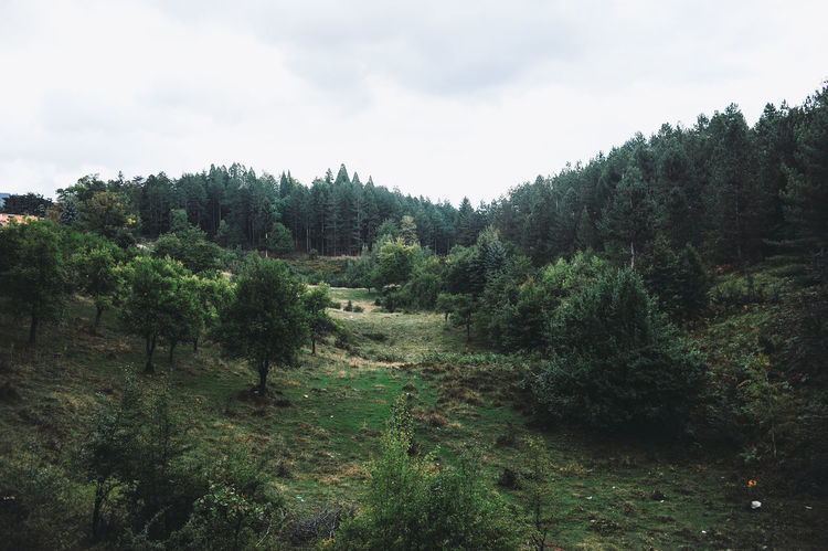 Bosnia And Herzegovina Beauty In Nature Day Forest Growth Landscape Nature No People Outdoors Plant Sarajevo Sky Tree