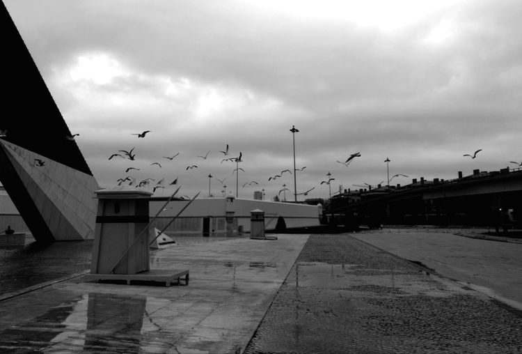No People Sky Cloud - Sky Outdoors Day Black And White Photography P&B Outdoorphotography Lisbon - Portugal Storm Cloud Dramatic Sky Birds In Flight