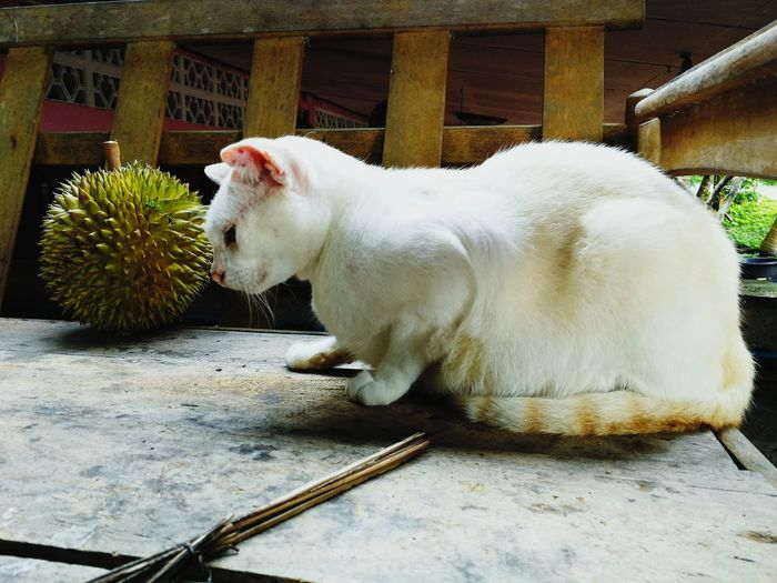 White cat sitting outdoors