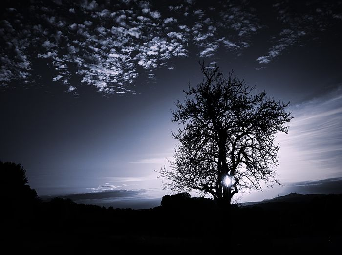 Silhouette tree on field against sky at dusk