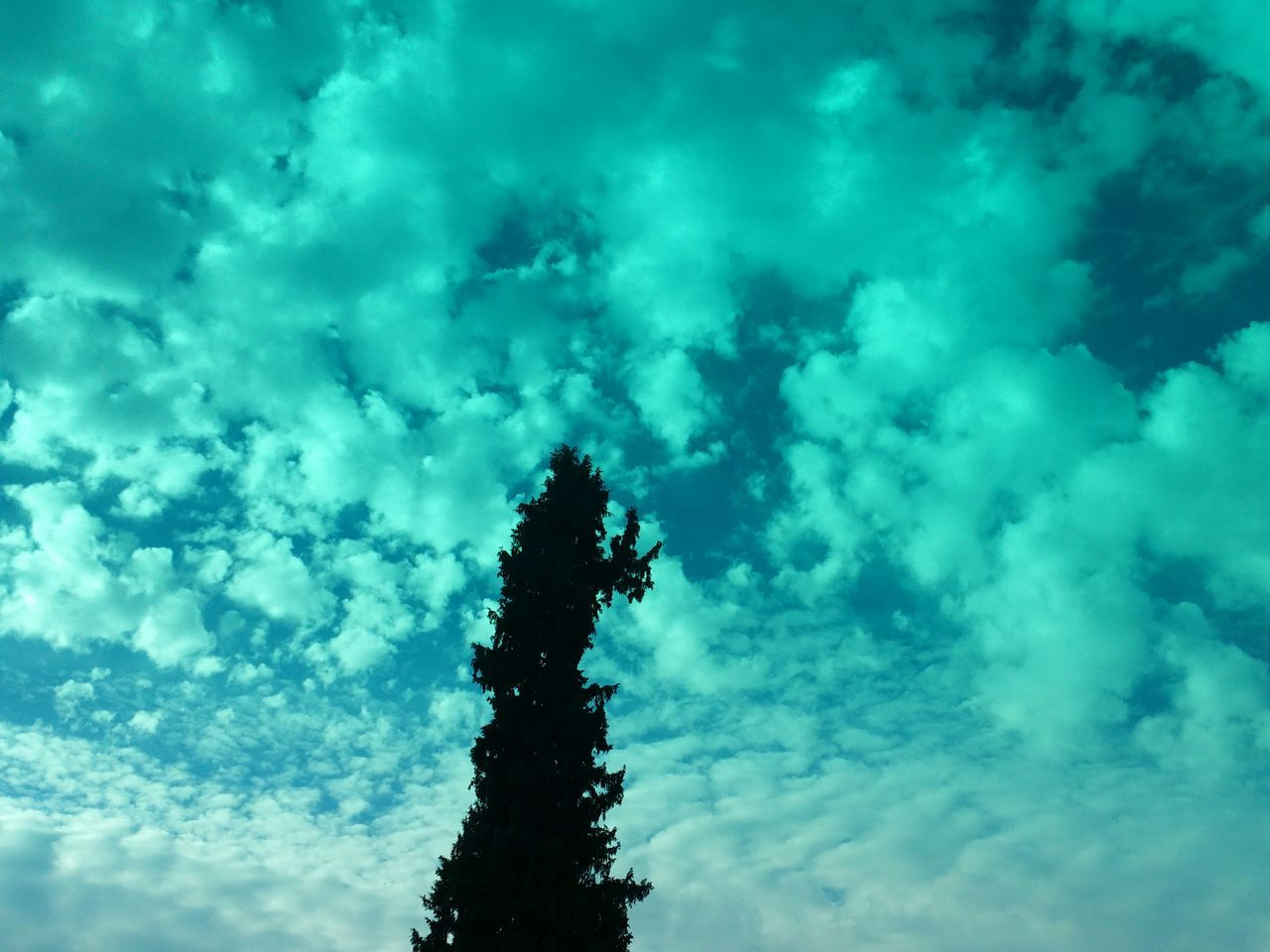 low angle view, sky, cloud - sky, silhouette, nature, no people, beauty in nature, day, outdoors, tree, growth