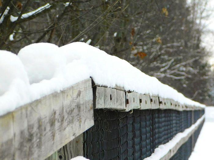 Snow Winter
